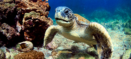 Galapagos Islands Cruise Packages